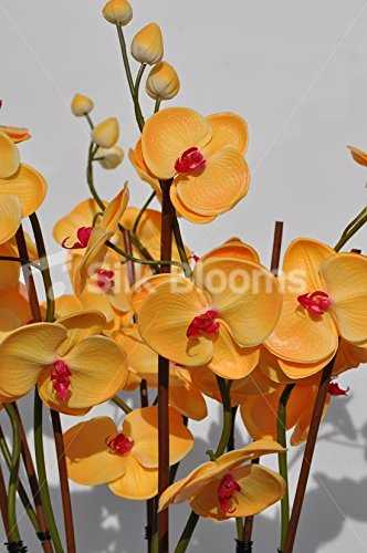 Gorgeous Fresh Touch pesca Orchid Plant Composizione floreale con foglie